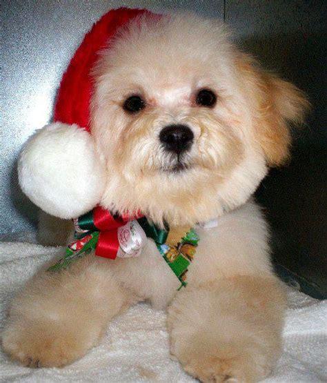 dog  great   holidays  la habra ca