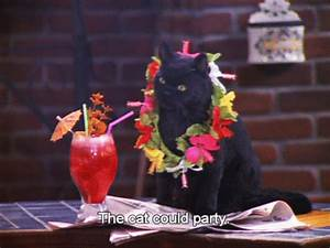 gif cat 90's Sabrina the teenage witch salem youll-never ...