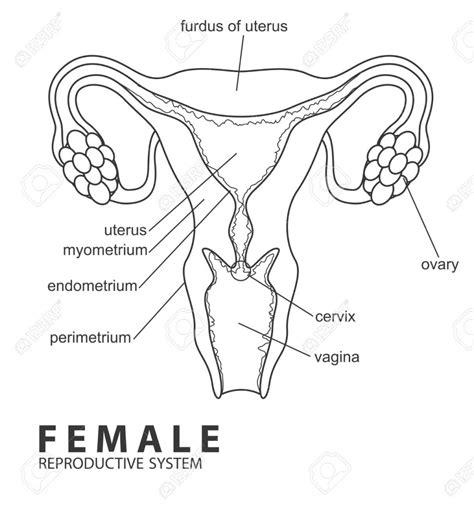 Female Reproductive System Anatomy Worksheet  Dogar #5fa4842e41fc