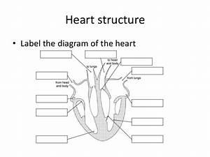 Mrs Abrey Lesson 12 Heart Structure