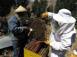 Senasa Resguarda Sanidad Ap U00edcola En Cusco