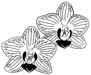 Clip Art Black And White Orchid Clipart
