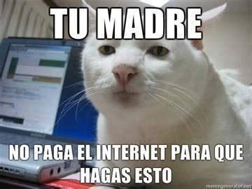 Jesus Alejandro Memes - memes de gatos para whatsapp fondos wallpappers portadas
