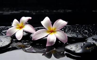 Zen Desktop Water Stones Drops Felsen Steine