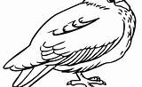 Pigeon Coloring sketch template