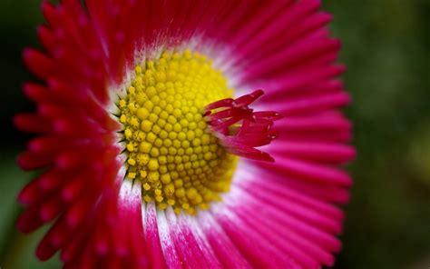 high res flower backgrounds hd desktop wallpapers  hd