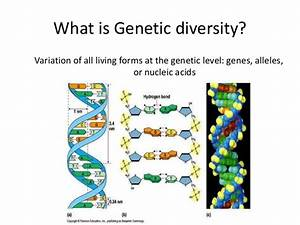 Diagram Of Genetic Diversity