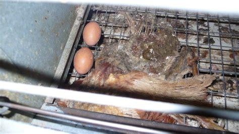 batterie cuisine en 2012 fin des cages de batterie mejliss