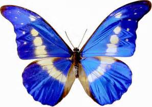 Free Printable Butterflies Clip Art