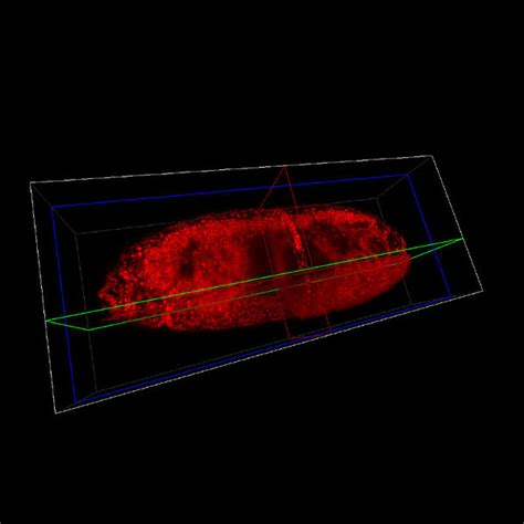 fluorescence imaging of entire living organisms imaging