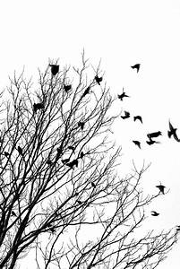 Black And White Bird Wallpapers (43 Wallpapers) – Adorable ...