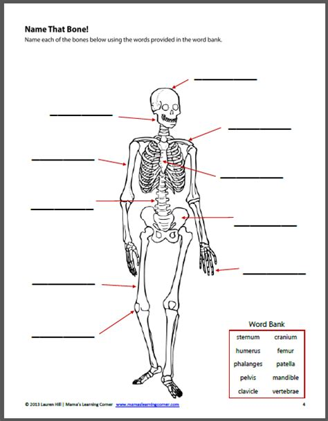 the human body worksheet packet for 1st 3rd graders