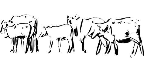 gambar sketsa mewarnai gambar hewan domba darat  rebanas