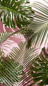 Tropical Leaves Mobile + Desktop Wallpaper Download ...