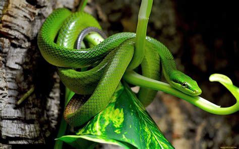 imagenes  fondos de pantalla de serpientes wallpapers hd