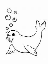 Coloring Seals Pages Printable sketch template
