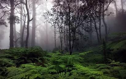 Forest Rain 4k Desktop Wallpapers