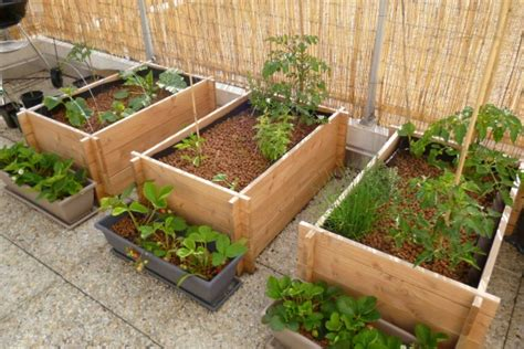 potager au balcon jardinage