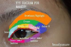 This Is Awesome  A Labeled Eyelid Diagram