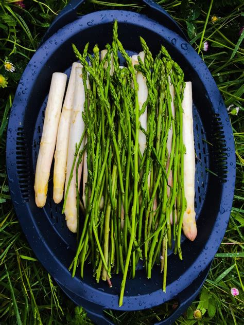 comment cuisiner les asperges sauvages loulougourmet l 39 asperge des bois