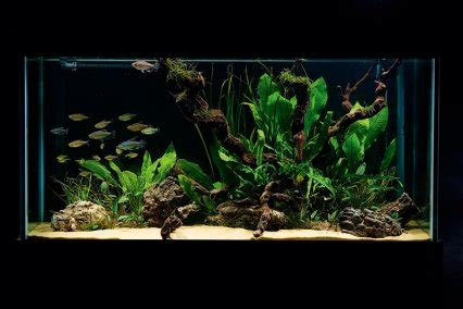 Simple Aquascaping Ideas by How To Set Up A Simple But Stunning Planted Tank