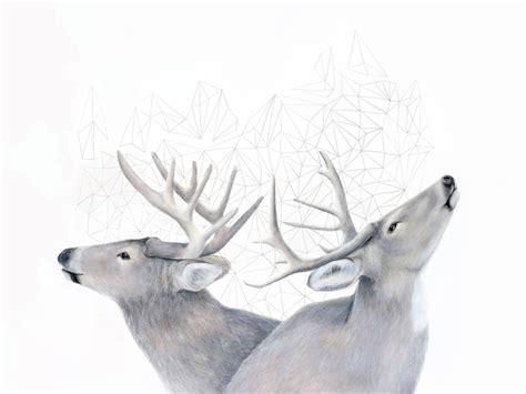 artistic drawings  animals combined  geometric forms