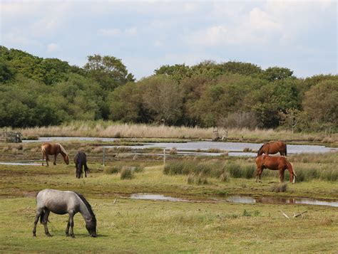 forest park national ponies lepe england file hampshire commons wikipedia outstanding natural beauty