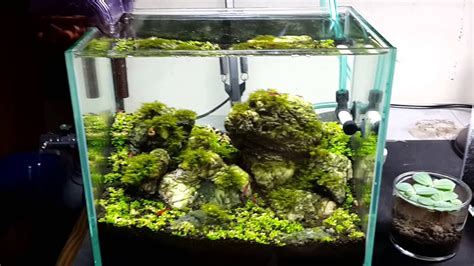 Aquascape Shrimp Tank my nano shrimp aquascape tank