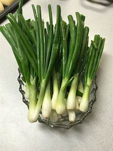 17 Best Images About Onion Plants From Dixondale Farms On