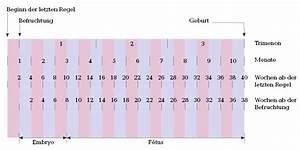 Schwangerschaft Wochen Monate Berechnen : embryologie das gro e mama handbuch ~ Themetempest.com Abrechnung