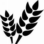 Icon Agriculture Plant Grain Cash Vascular Vectorified