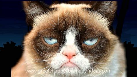 Grumpy Cat Happy Birthday Song  Just For Fun! Pinterest