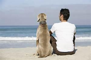 Durée De Vie D Un Moucheron : dur e de vie d un chien de quoi d pend elle ooreka ~ Farleysfitness.com Idées de Décoration