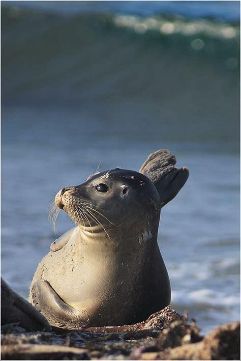 Cute marine mammals (66 pics) - Izismile.com