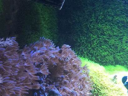 Xenia Coral Pulsing Palytoxin Poisoning Cause Did