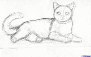 how to draw a realistic cat how to draw a realistic cat apps directories