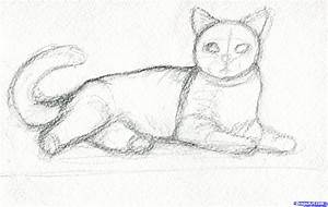 How To Draw Realistic Cats Real Step 2 An Easy By - Litle Pups