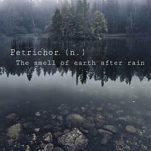 8tracks radio |... Petrichor
