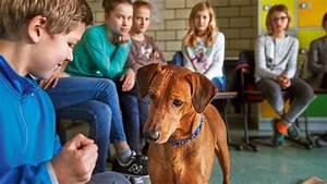 Hunde Größe Berechnen : hunde im schulunterricht hunde im schulunterricht ~ Themetempest.com Abrechnung