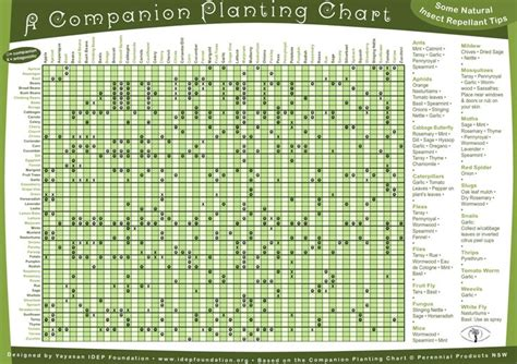 ultimate companion planting guide chart flower