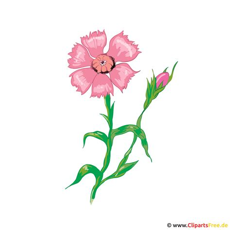 blume zyane bild illustration karte