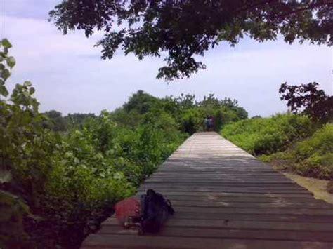 wisata mangrove bozem wonorejo surabaya youtube
