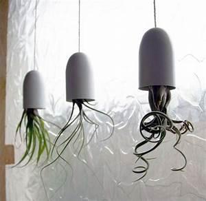 Hängende Pflanzen Für Draußen : die besten 25 h ngende pflanzen ideen auf pinterest ~ Sanjose-hotels-ca.com Haus und Dekorationen