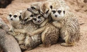 Kuscheln Auf Englisch : welt knuddel tag umarmen sie sich denn kuscheln ist gesund ~ Eleganceandgraceweddings.com Haus und Dekorationen