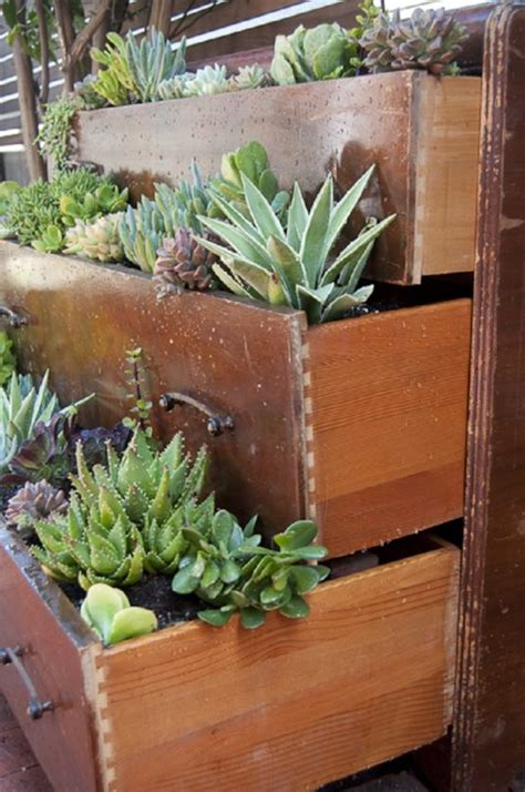succulent garden ideas  tips  grow  outdoors