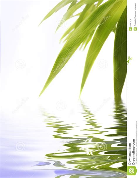 bamboo in water royalty free stock image image 6530206