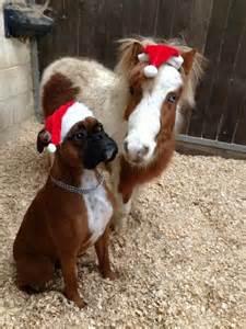 Funny Boxer Dog Christmas
