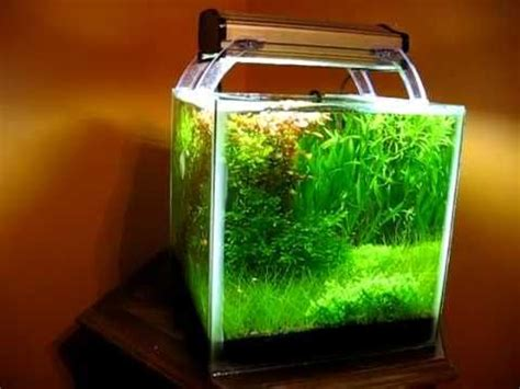 shrimp tank aquascape planted shrimp cube