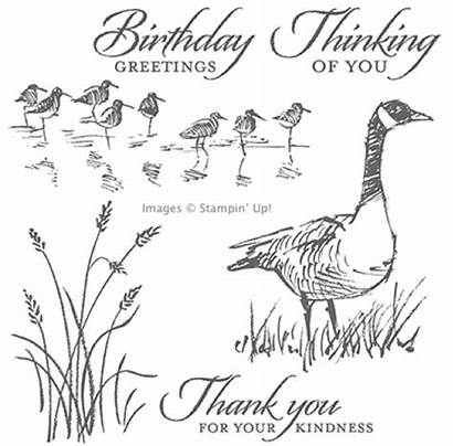 Wetlands Stamp Stampin Stamping Stamps Wetland Clear