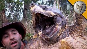 The BIGGEST Turtle You've EVER seen! - YouTube